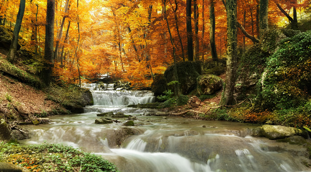 Waterfall by autumn trees forest landscape wall mural for Autumn forest wallpaper mural