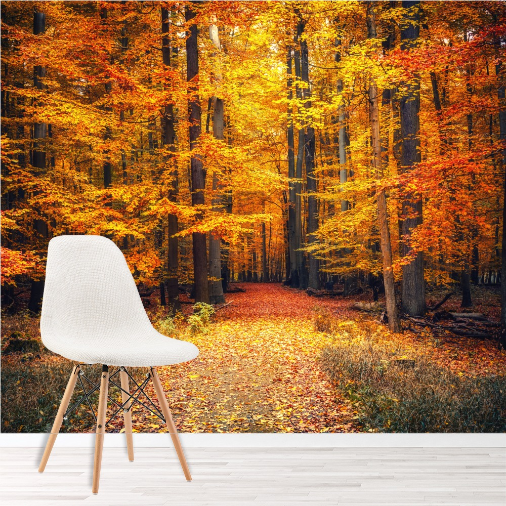 Autumn trees wall mural orange red forest photo wallpaper for Autumn wall mural