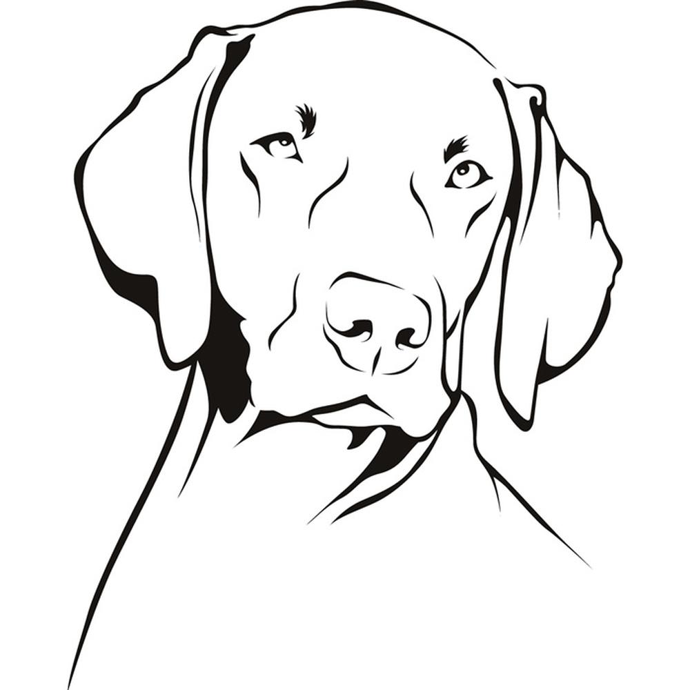 Weimaraner Dog Animals Pets Wall Sticker WS-19615