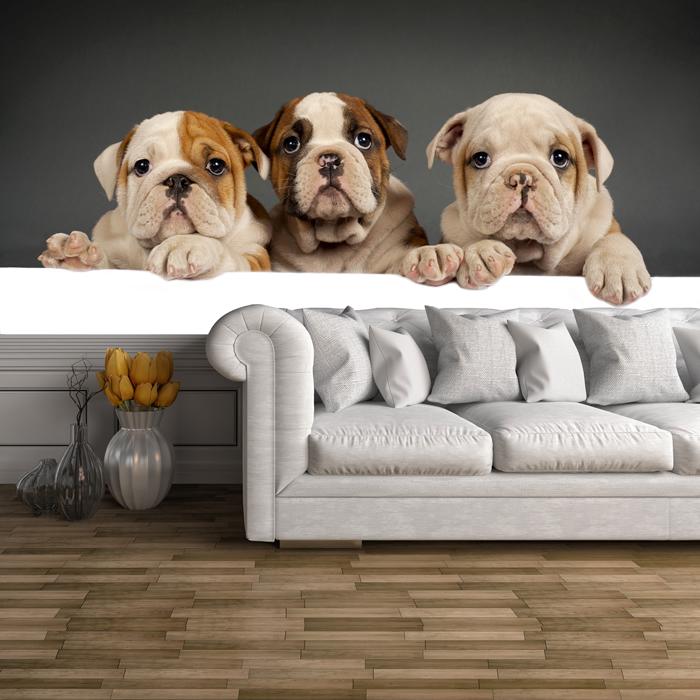 englische bulldogge welpenhunde fototapete s e tiere tapete kinder dekor ebay. Black Bedroom Furniture Sets. Home Design Ideas