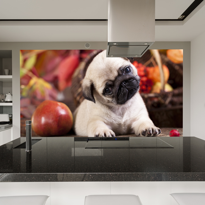 Cute Pug Puppy Dog Wall Mural Animal Photo Wallpaper Kids