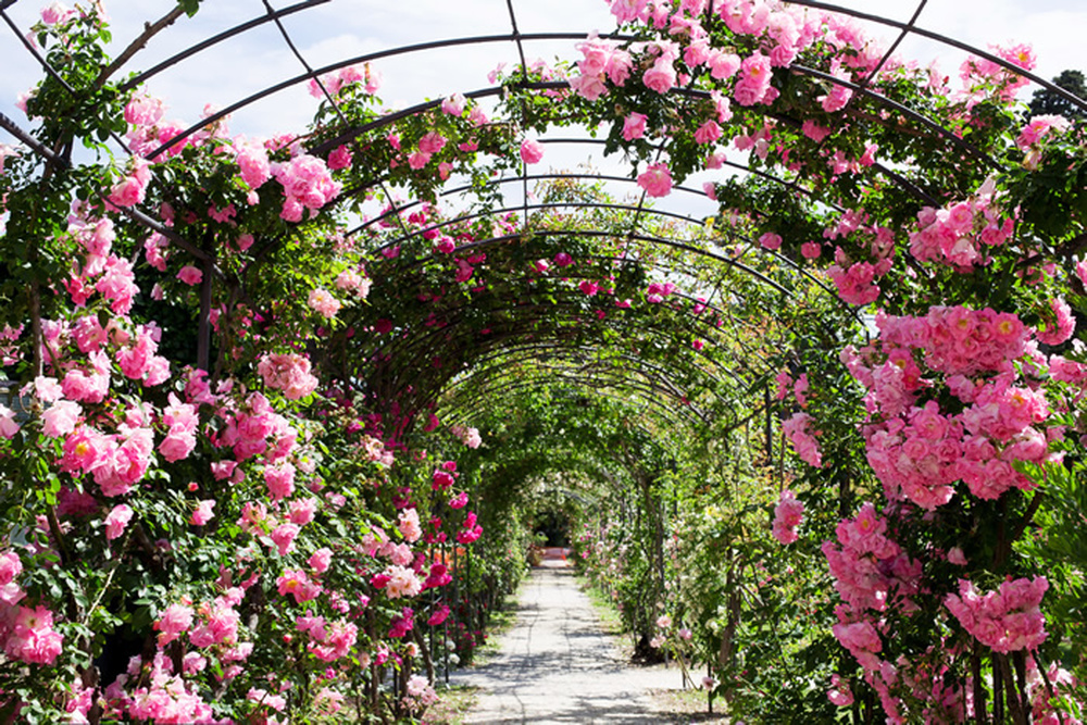 Details About Rose Flower Garden Wall Mural Pink Floral Photo Wallpaper Bedroom Home Decor