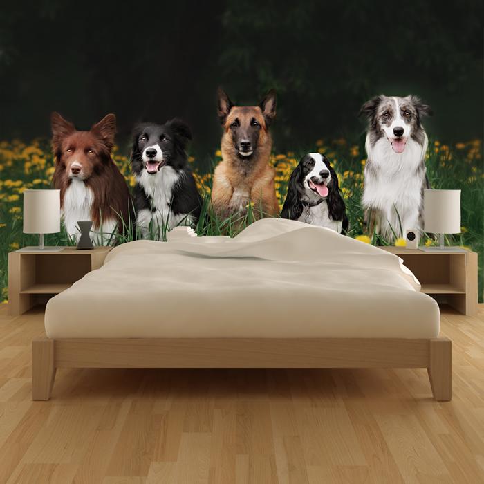 hunde wandbild haustiere und tier foto tapete natur schlafzimmer wohnkultur ebay. Black Bedroom Furniture Sets. Home Design Ideas